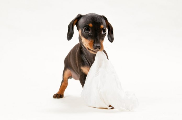 dog ate paper towel