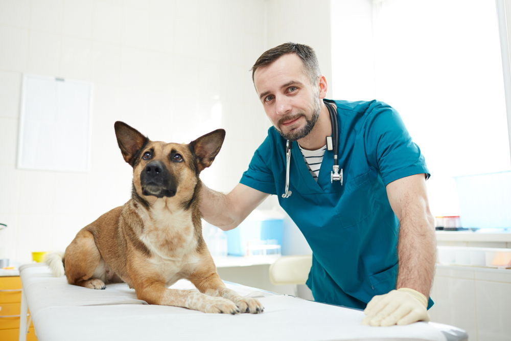 young veterinarian one his patients having