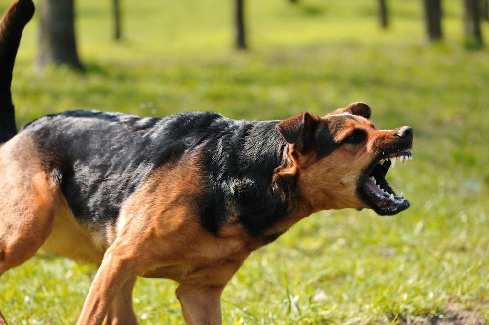 5 Safe Tips on What To Do If An Aggressive Dog Approaches You