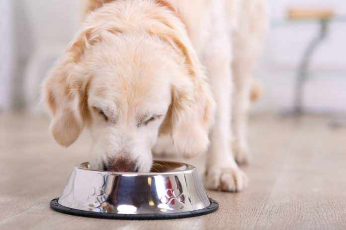 Where to Put Dog Bowls
