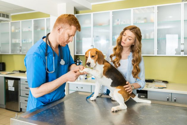 Common Health Problems In Beagles