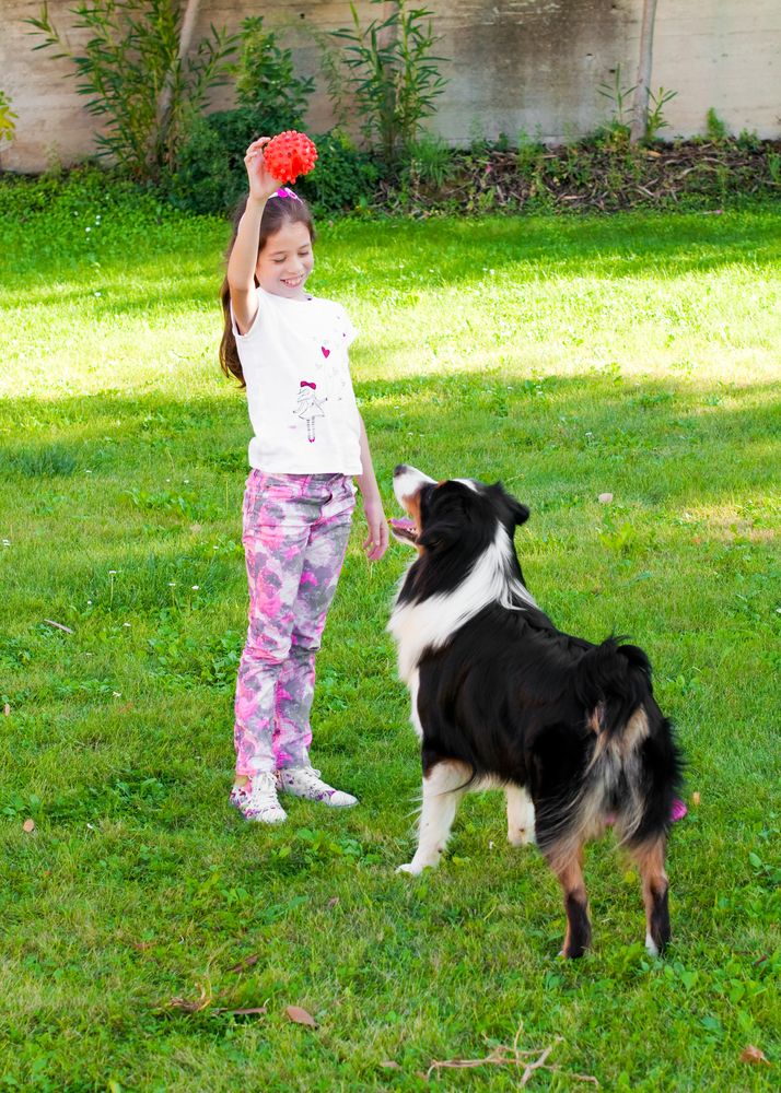 Girl playing with Australian shepherd dog
