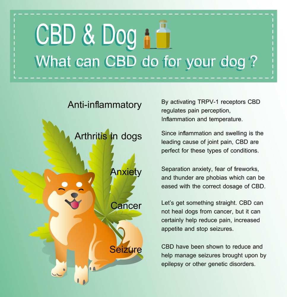 what can CBD do for your dog