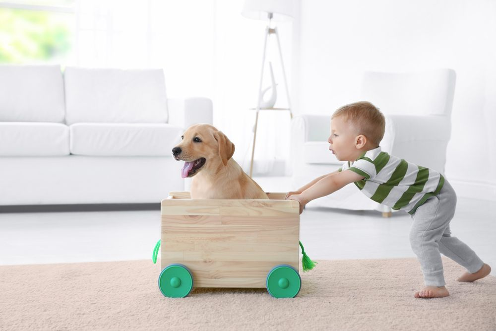 The Most Child Friendly Dog Breeds For Your Family