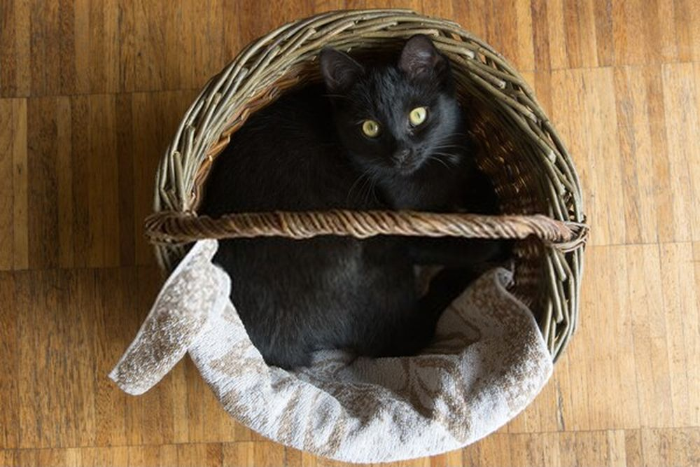 black cat lying in a wicker basket