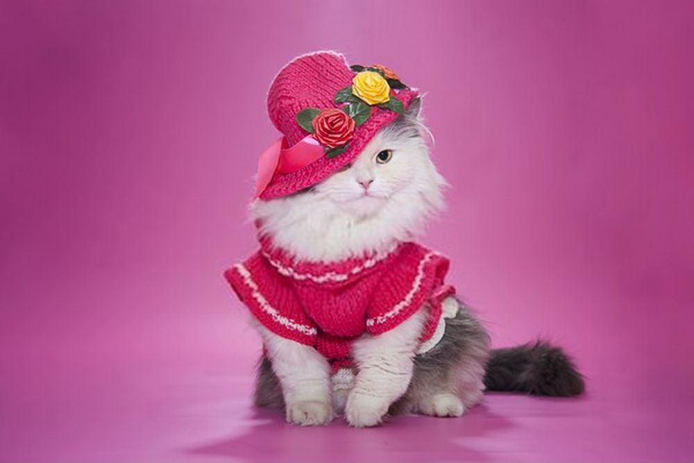 cat in a pink dress and hat