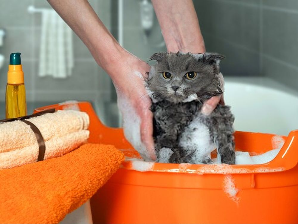 wash your cat