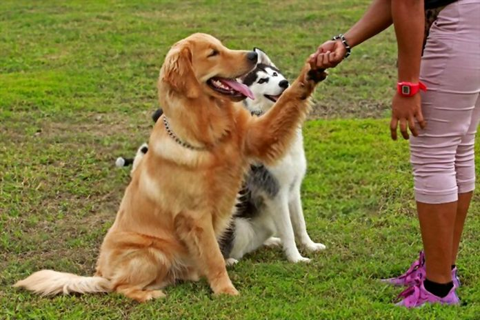 Why You Need to Hire a Professional Dog Trainer
