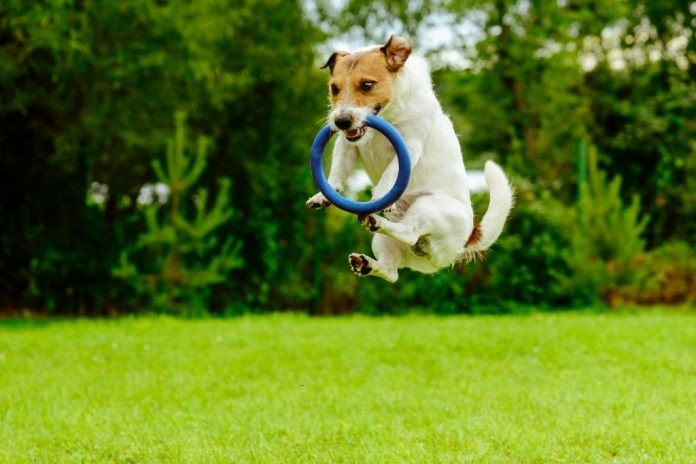 7 Outdoor Games for You and Your Dog