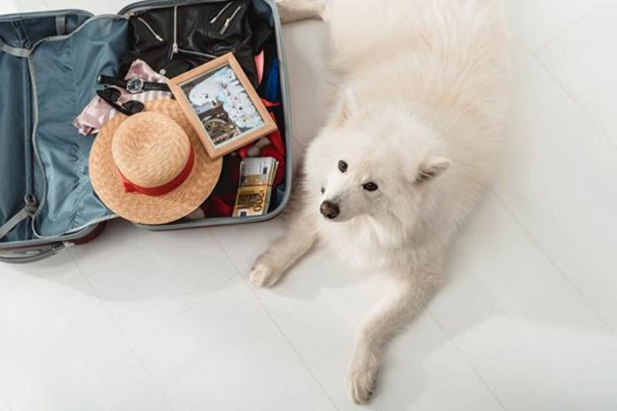 Pet Carriers & Airplane – Your Pet's Travel Goals