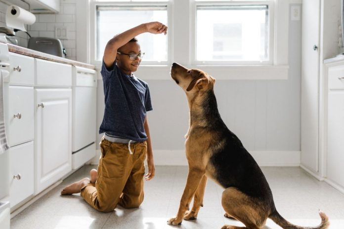 Pet Training Techniques - The Fundamentals
