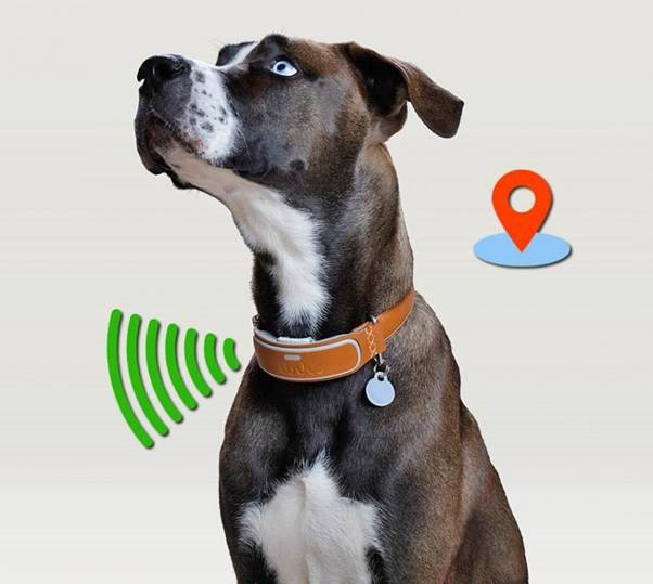 Where Can You Buy GPS Devices For Dogs