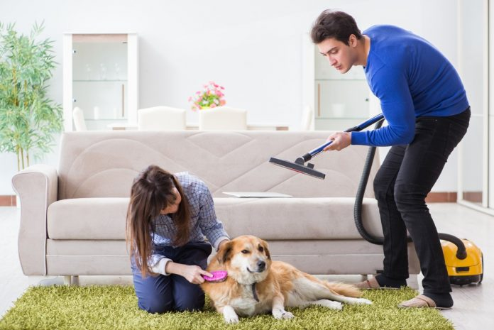 flea control for dogs