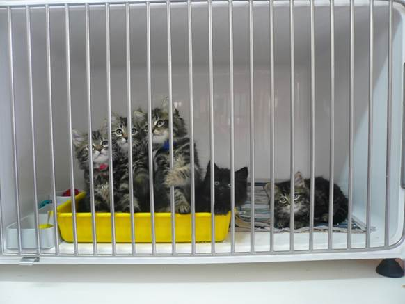 Housing a Cat in a Cage – How To Choose The Best One