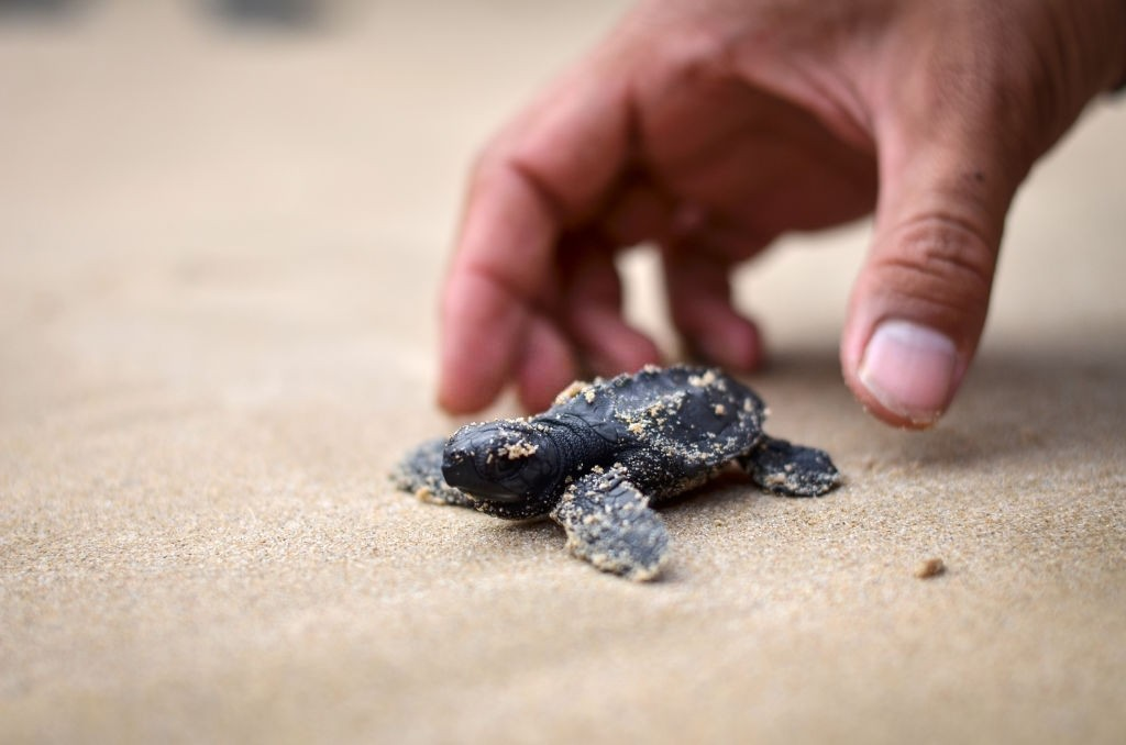 what to do if you find a baby turtle