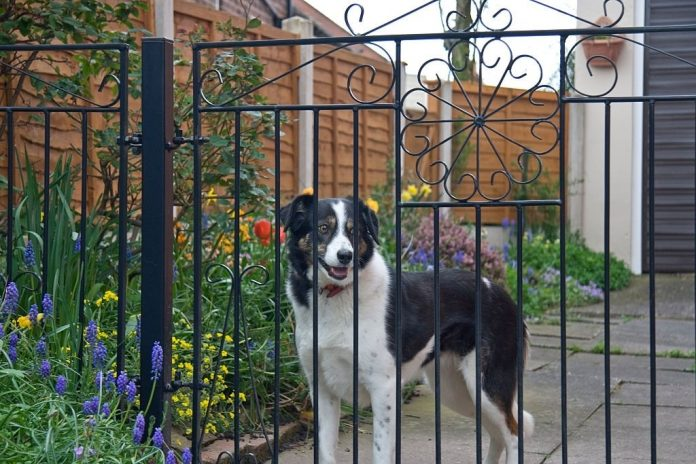 Types of Dog Fence System That Works Well