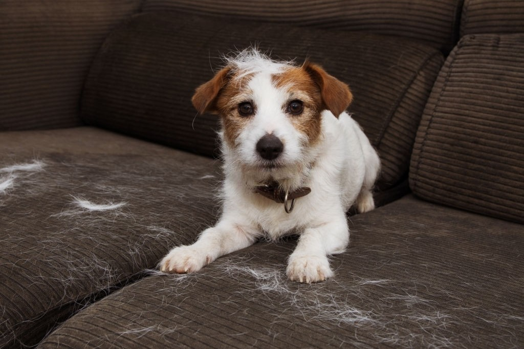 Best Tools for Reducing Dog Hair on Furniture
