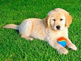is artificial grass safe for dogs