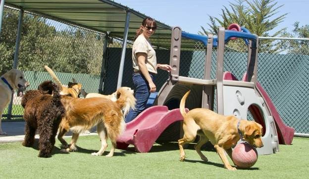 Useful Tips For Choosing Dog Daycare and Boarding Services