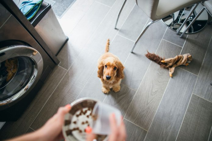 Top Tips On Healthy Nutrition For Your Dog