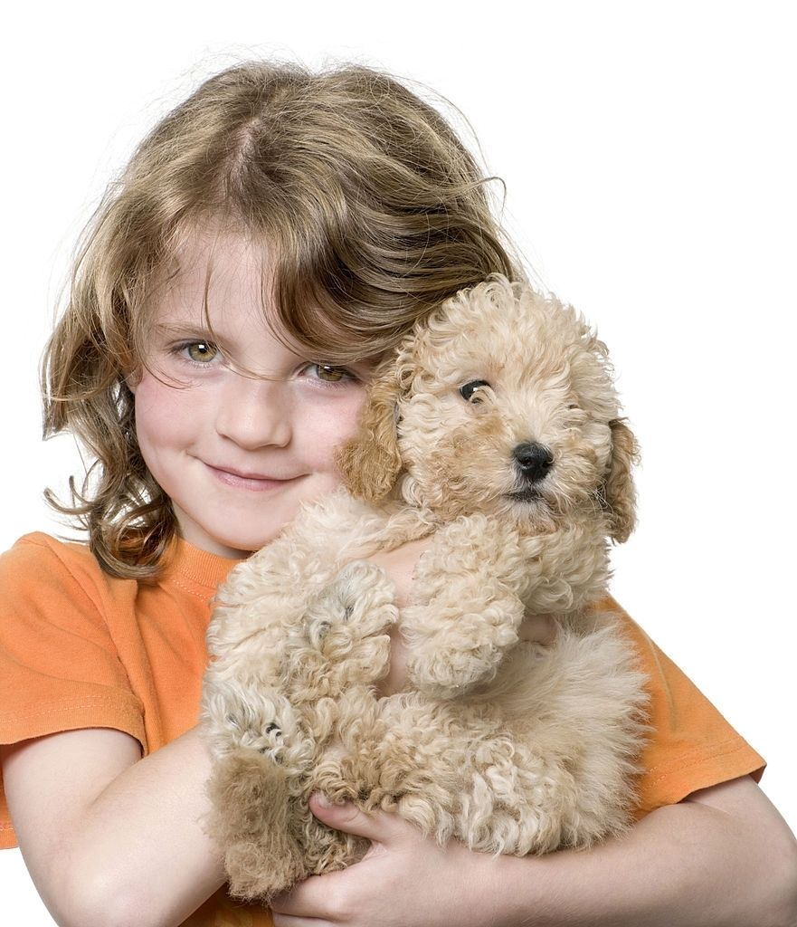 Young girl with her toy Poodle puppy