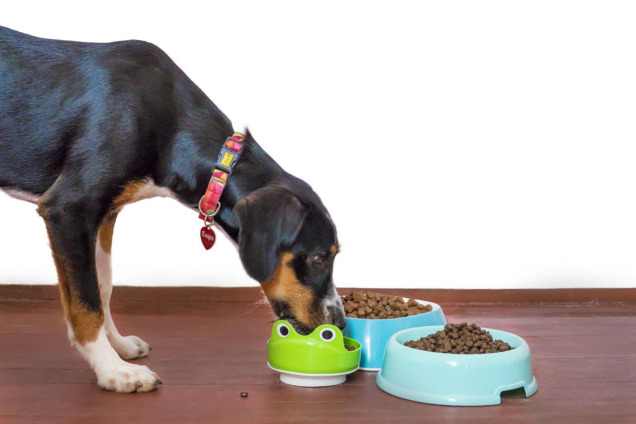 Choosing the Right Dog Food for the Breed