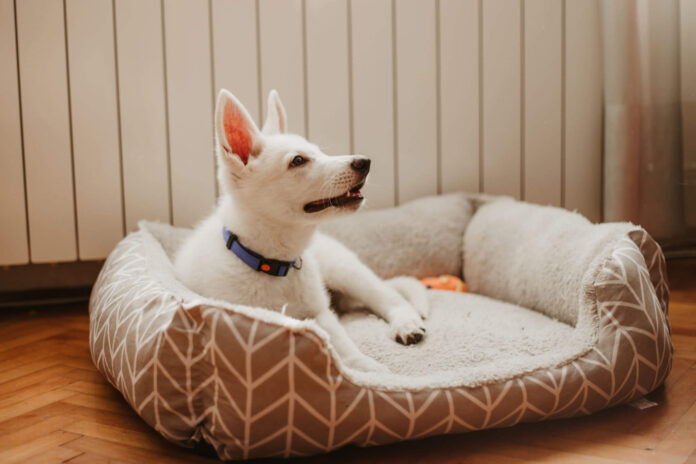 What To Know About Durable, Washable, And Reversible Pet Beds
