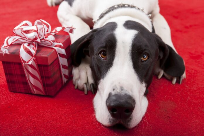 7 Great Gift Ideas for Animal Lovers
