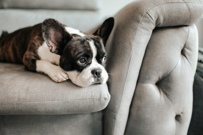Signs That Your Dog May Need Additional Help