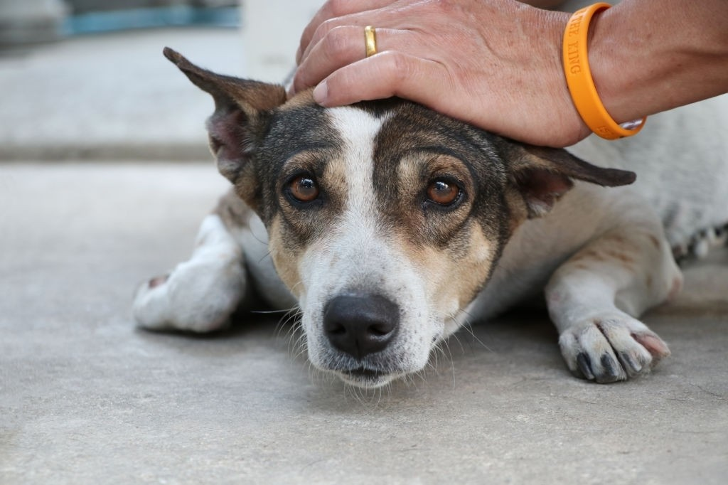 how to care for a dog with an enlarged heart