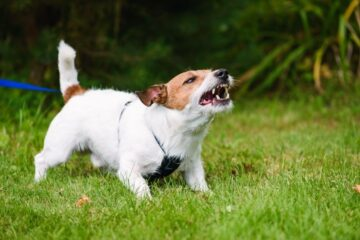 How To Correct Aggressive Dog Behavior? Signs, Causes and Treatments
