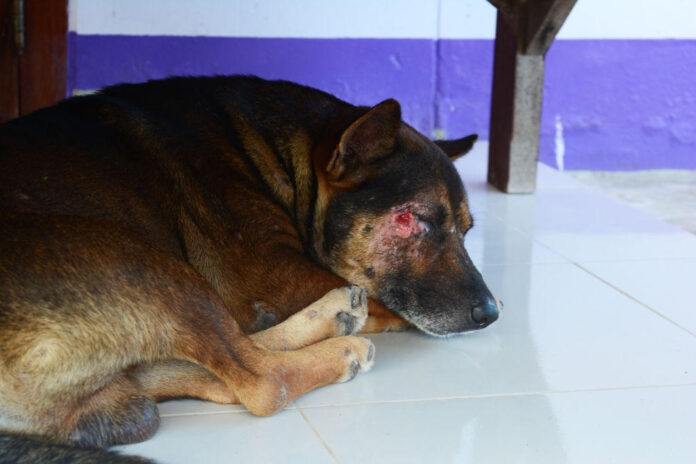 how to keep a dog from scratching a wound