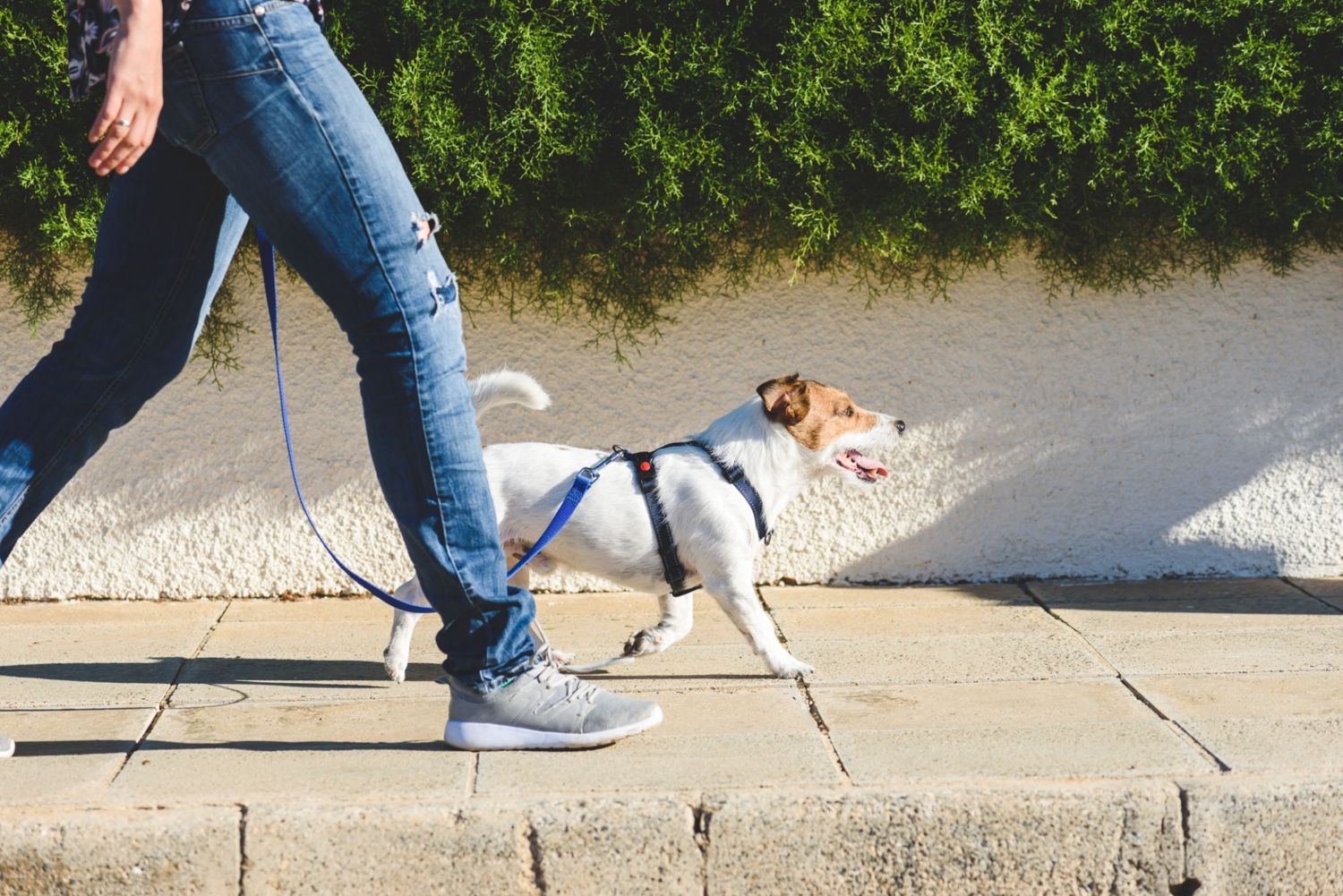 How To Prevent Falling Over Your Pets