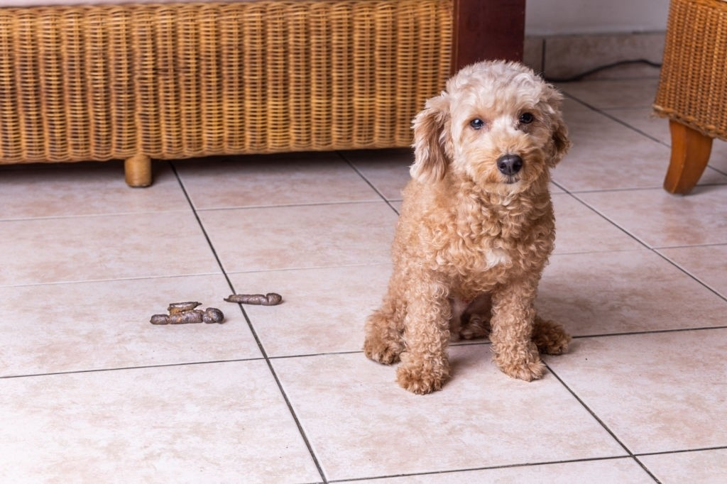 how to store dog poop until trash day