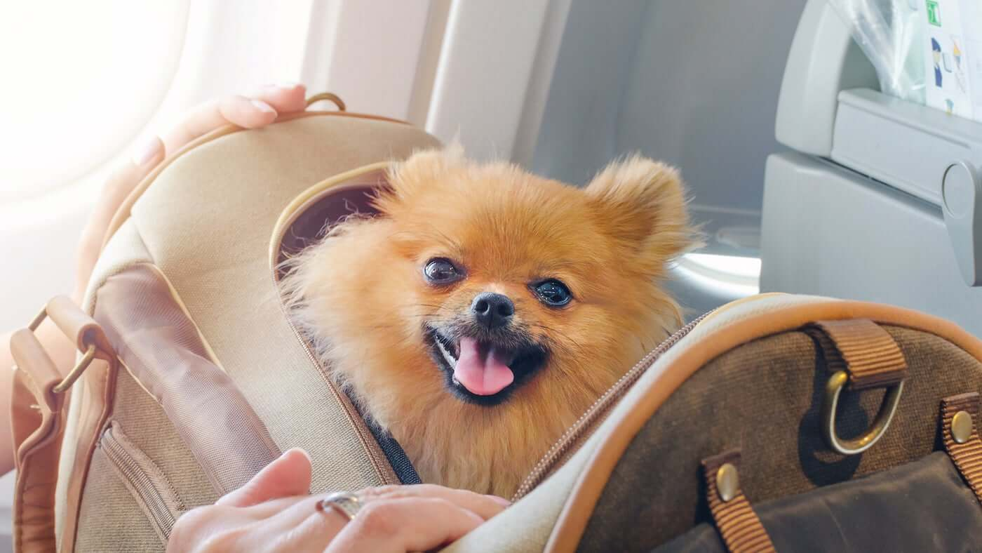 The Ultimate Guide To Find The Ideal Carrier For Your Dog