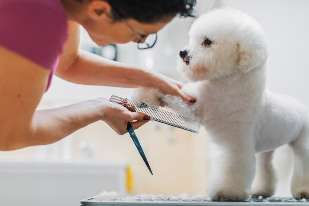 Tips For Grooming Your Dog