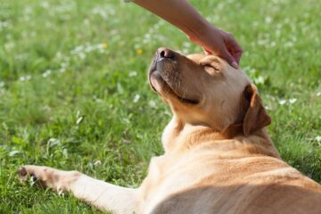 How to Help Your Dog Live a Long, Healthy, Happy Life?