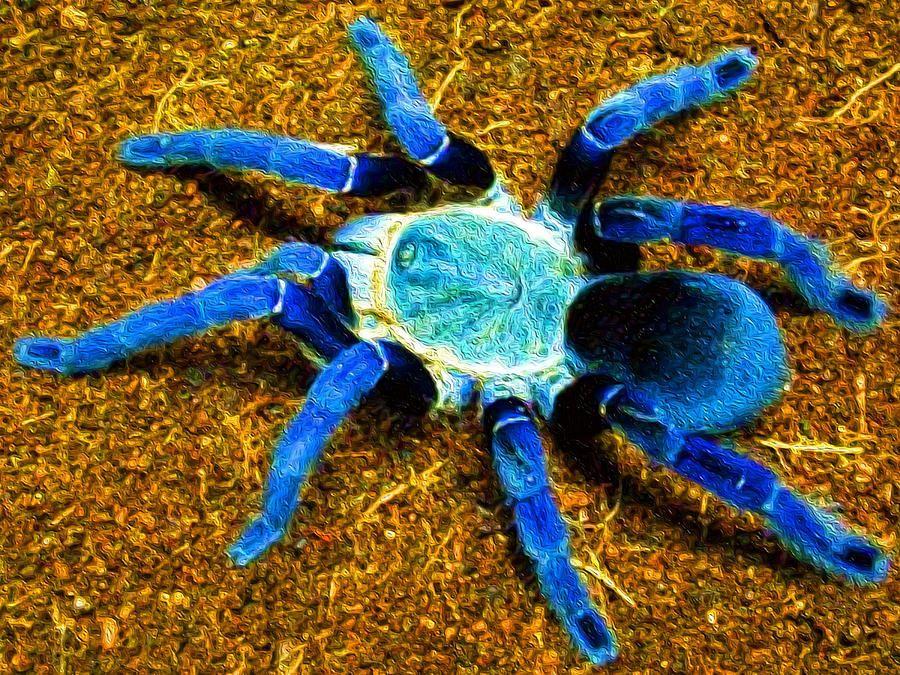 How to Keep a Cobalt Blue Tarantula as a Pet