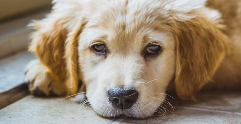 The Surprising Benefits of Giving Your Dog Calming Treats