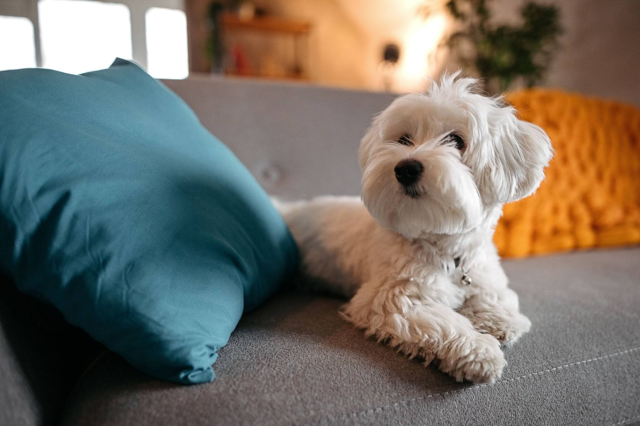 5 Tips for Pet-Proofing Your Living Room