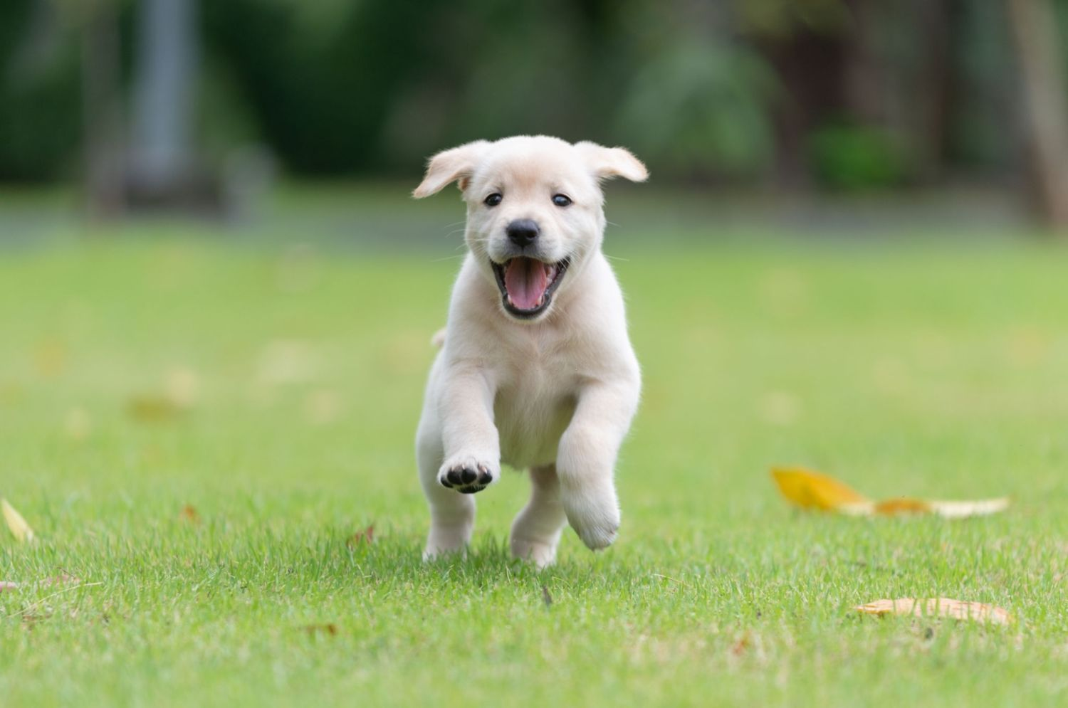 How Much Exercise Should Puppies Get