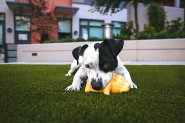 5 Paws-itively Fun Indoor Activities for Dogs and Kids to Do Together