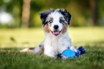 7 Tips To Keep Your New Puppy Healthy And Safe